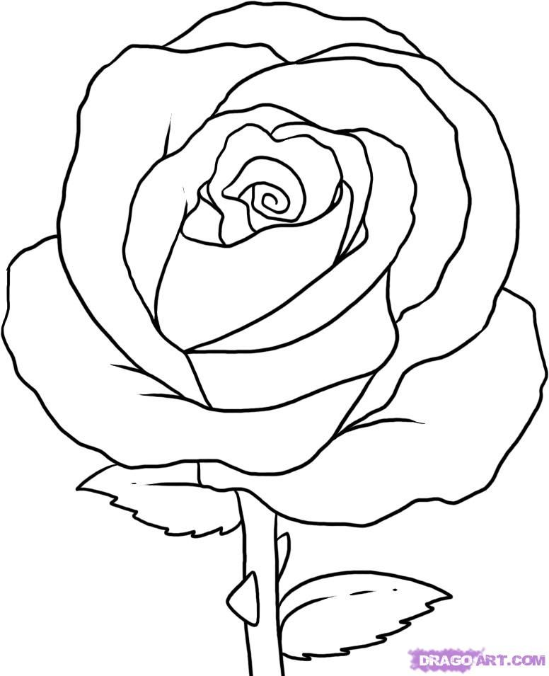 Line Drawing Of Rose Flower : How to draw simple a rose step by