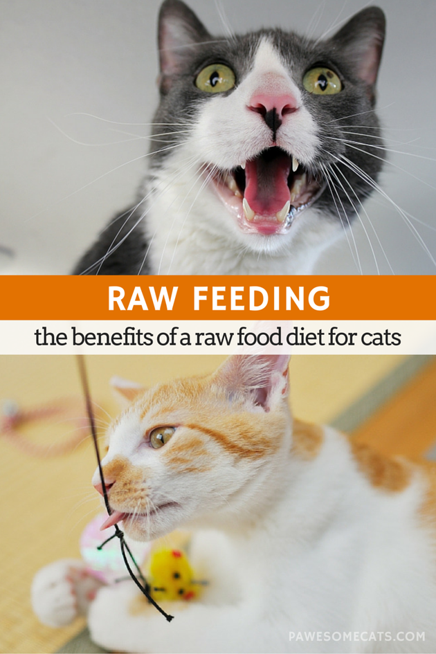 The Benefits of a Raw Food Diet for Cats Raw food