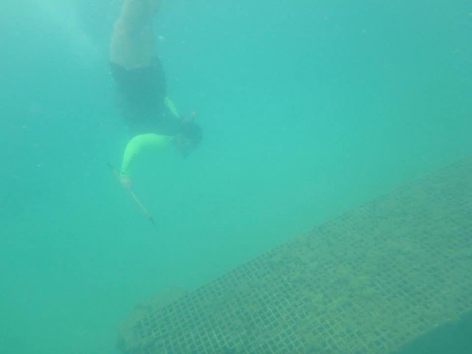 Jaulas en el fondo del mar! San Juan, PR