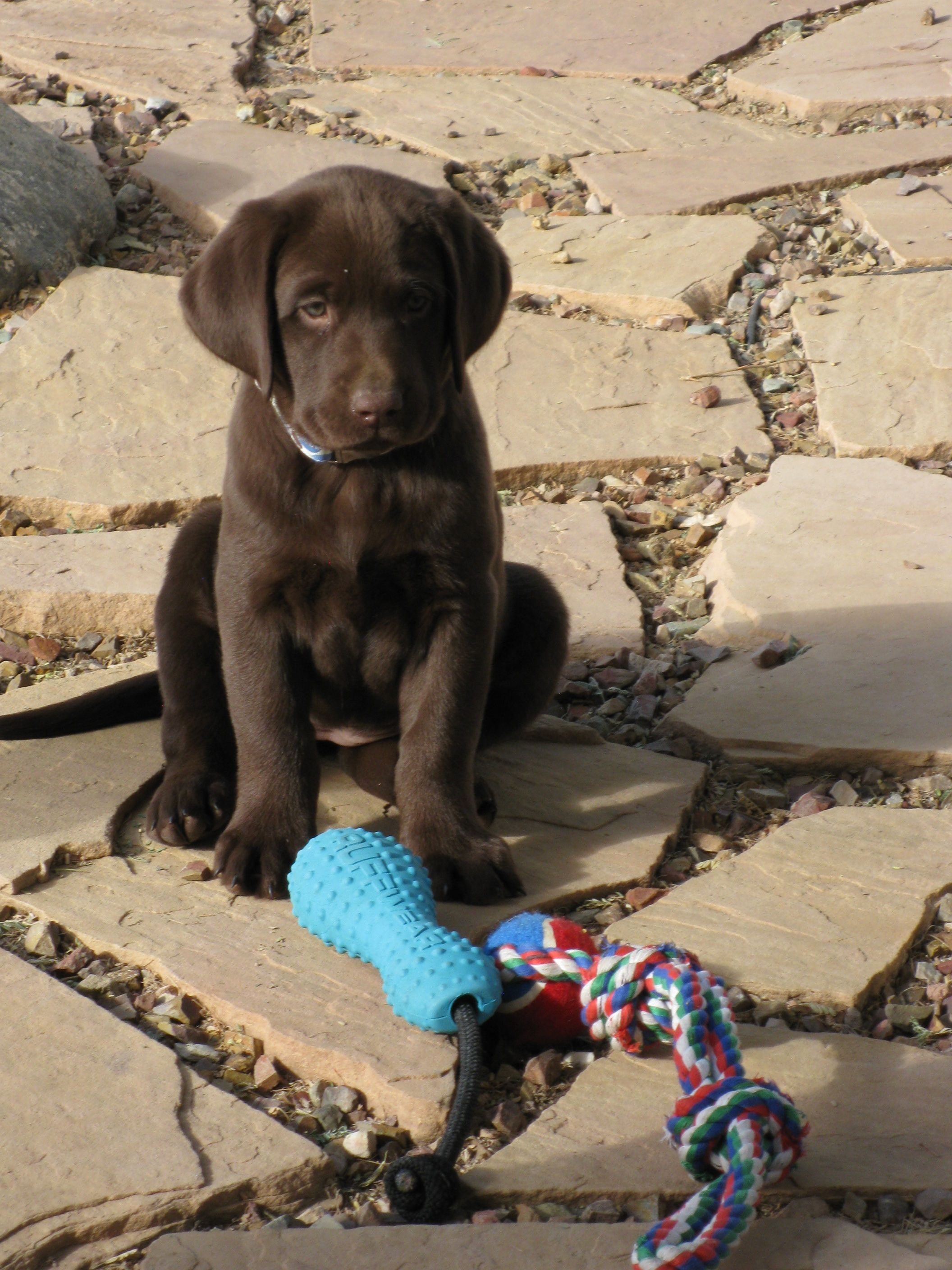 One day I will have a chocolate lab named Riley. I pre-name animals the way most people dream about kids' names. :)