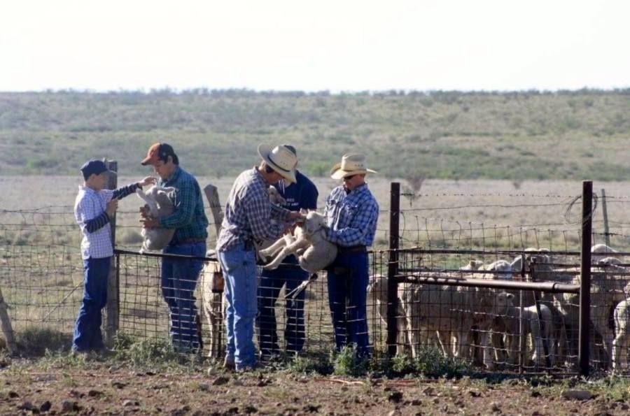 Ranchline Lamb Ch'arki #certifiedpaleo #paleo