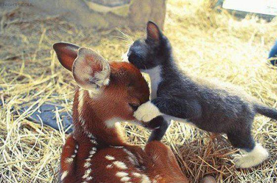 OMAGAAAAAAAD!!!!! This is the cutest thing ever ^^