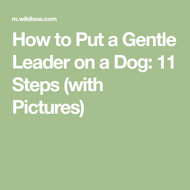 How To Put A Gentle Leader On A Dog 11 Steps With Pictures How To Make Greens Carob How To Make Icing