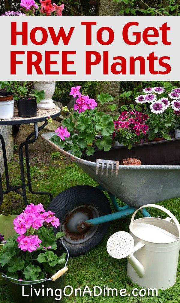 how to get free or cheap plants and seeds gardening pinterest jardinage potager et jardins. Black Bedroom Furniture Sets. Home Design Ideas