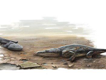 """""""O GRITO DO BICHO"""": Fósseis de salamandra pré-histórica são descoberto... #ogritodobicho #falabicho"""