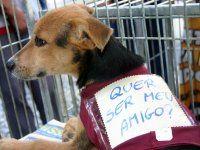Salão de animais terá desfile e concurso de cães na BMB http://www.pbagora.com.br/conteudo.php?id=20130702121814=economia=salao-animais-tera-desfile-concurso-caes-bmb #paraíba #animais #brasil #adote #adotar #adotarétudodebom