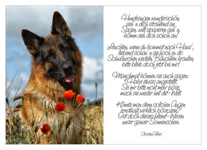 Beautiful Poem In German Hundeaugen Tiere Haustiere