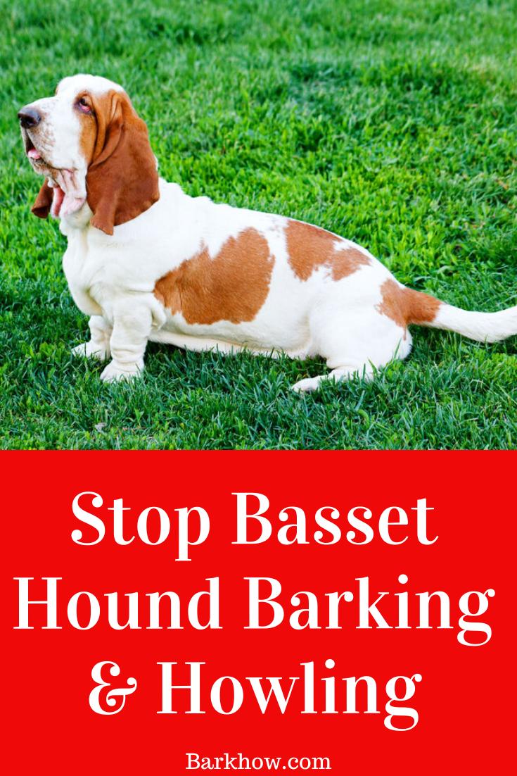 Train Basset Hound Not To Bark In 2020 Basset Hound Basset Hound
