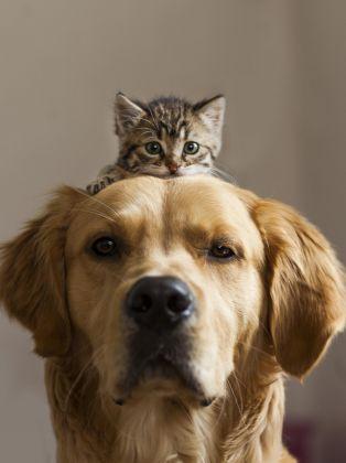 """Résultat de recherche d'images pour """"photo chat et chien"""""""