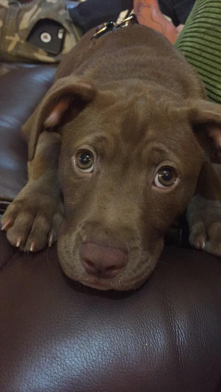 Our new doggo iftpeoxk cute uc pinterest dog