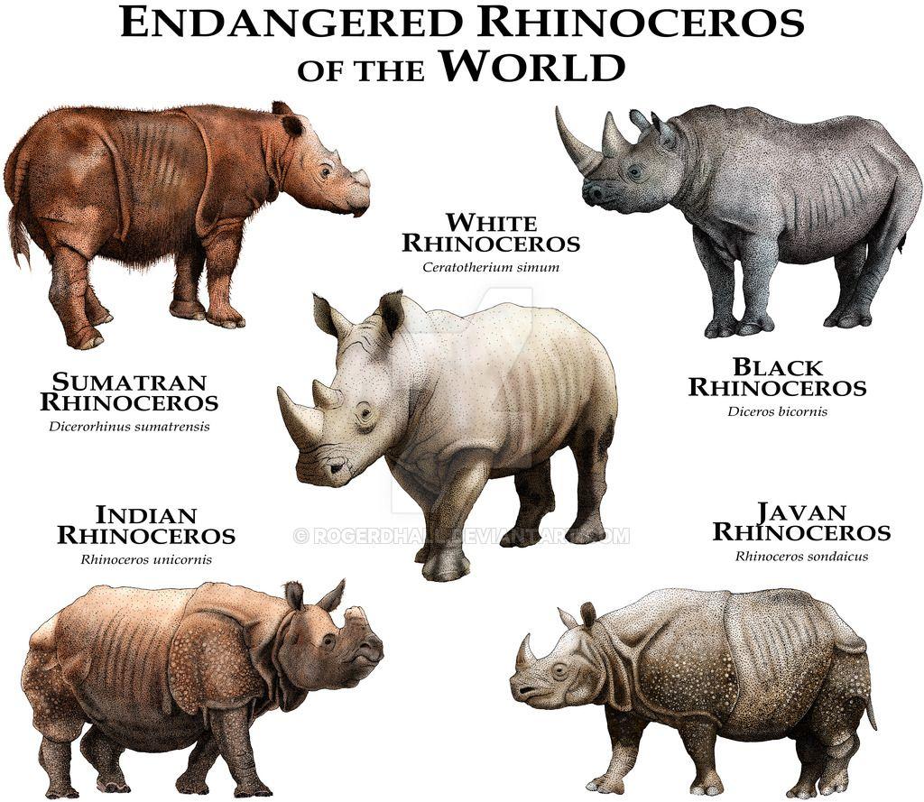 Endangered Rhinoceroses of the World by rogerdhall