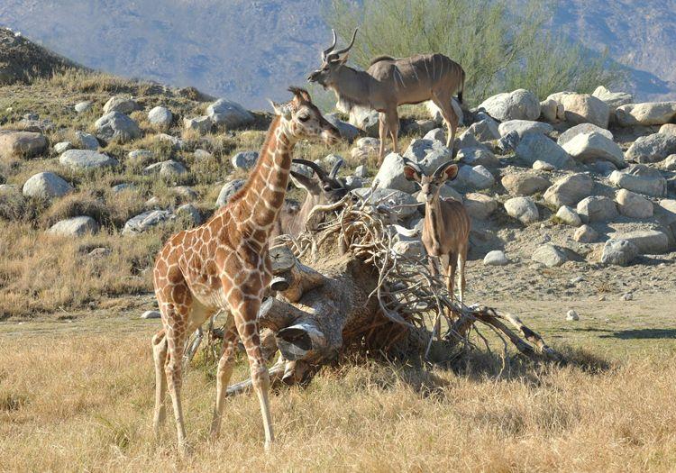 efb5fa195948ac7873637baeb7218c15 - The Living Desert Zoo And Gardens Tickets