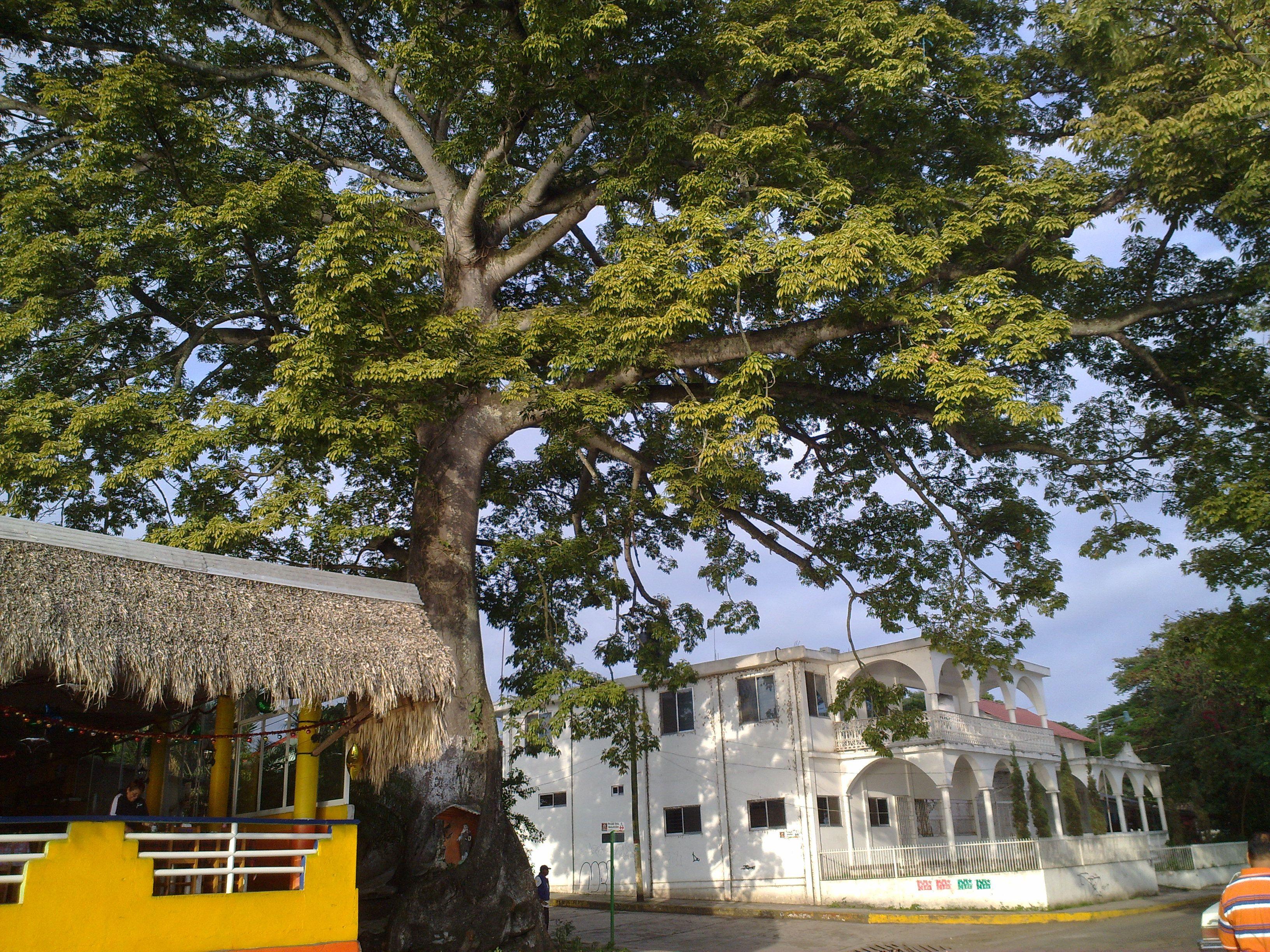 Nanciyaga Veracruz