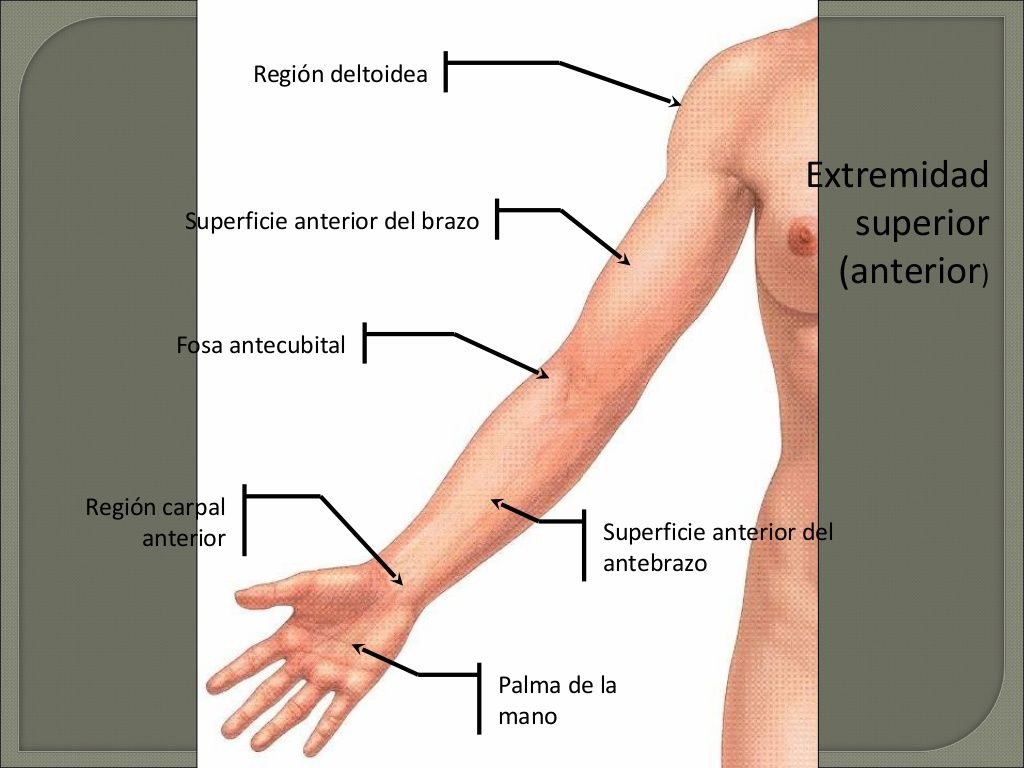 Región deltoidea Superficie posterior del brazo Superficie posterior ...