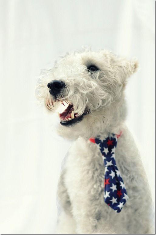 Easy Sew Dog Tie | Mascotas, Perruno y Mono