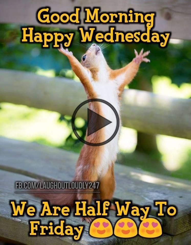 We are halfway to Friday, good morning happy wednesday We are halfway to Friday