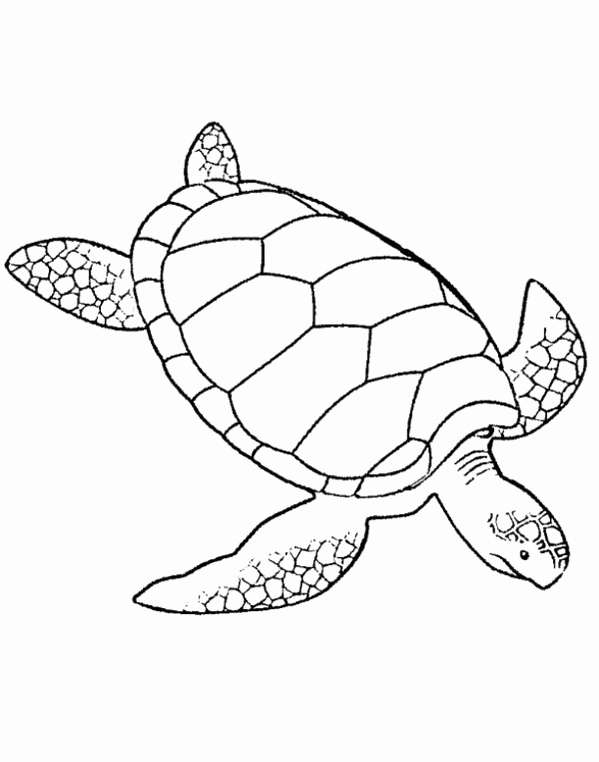 Sea Turtle Coloring Pages Printable New Coloring Pages