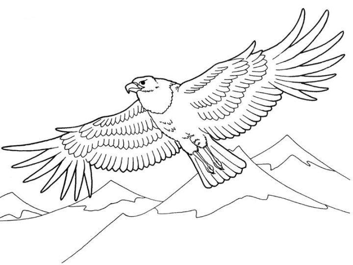 Adler 3 | coloring 5 | Pinterest | Adler, Malvorlagen kostenlos und ...