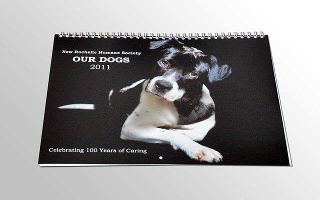 Photo Calendar Fundraising Ideas For Animal Shelters Animal Shelter Animal Shelter Fundraiser Shelter Dogs