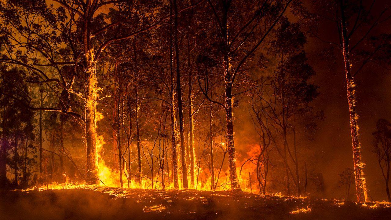 As fires rage across australia fears grow for rare