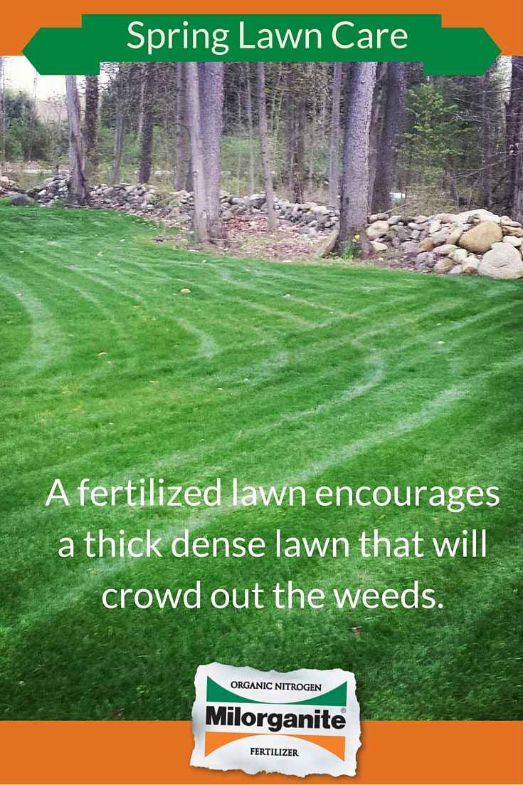 Fertilizing Your Lawn In The Spring Helps Speed Up The Recovery Process From Winter Damage Strengthens The Roots And Increase Spring Lawn Care Lawn Care Lawn