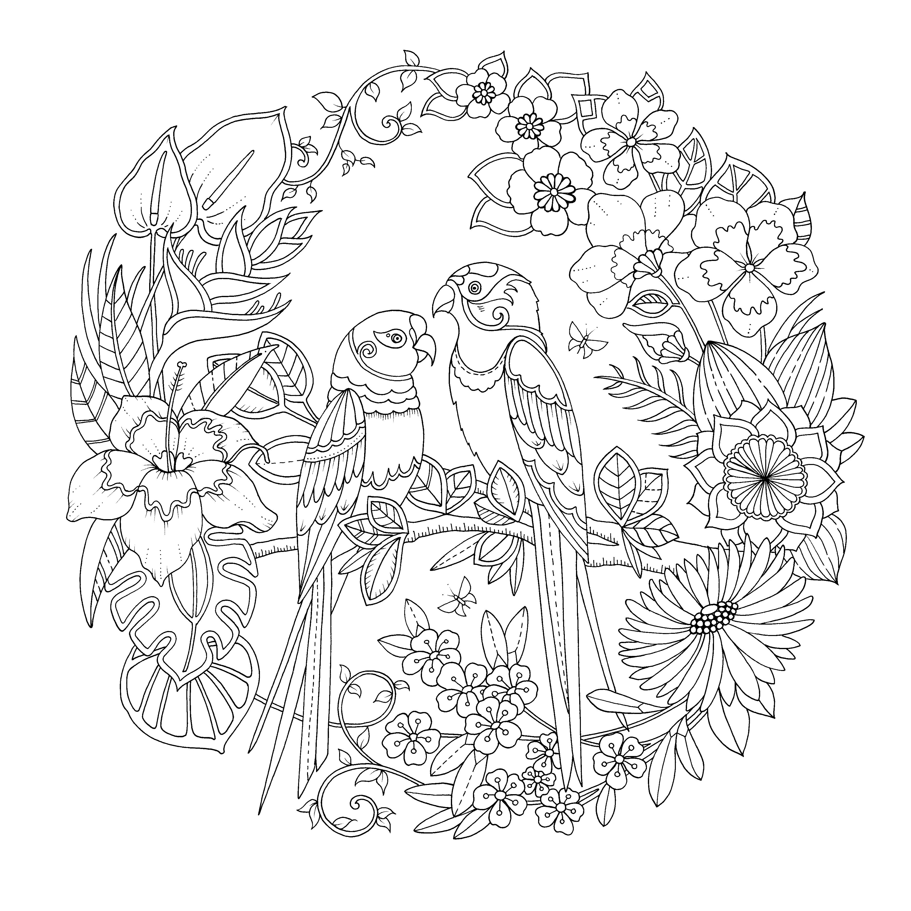 Jungle book colouring in pictures - Magical Jungle Basford Coloring Book