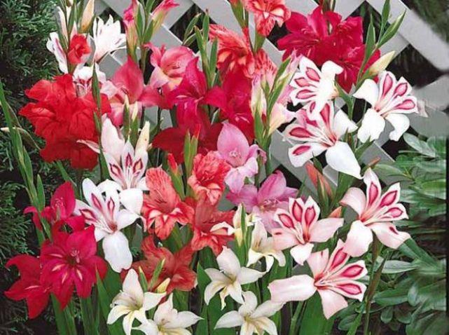 5 fleurs pas ch res planter en hiver fleurs pinterest jardins fleurs et fleur jardin. Black Bedroom Furniture Sets. Home Design Ideas