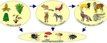 Pin On Dinamica De Los Ecosistemas Biología 4º Eso