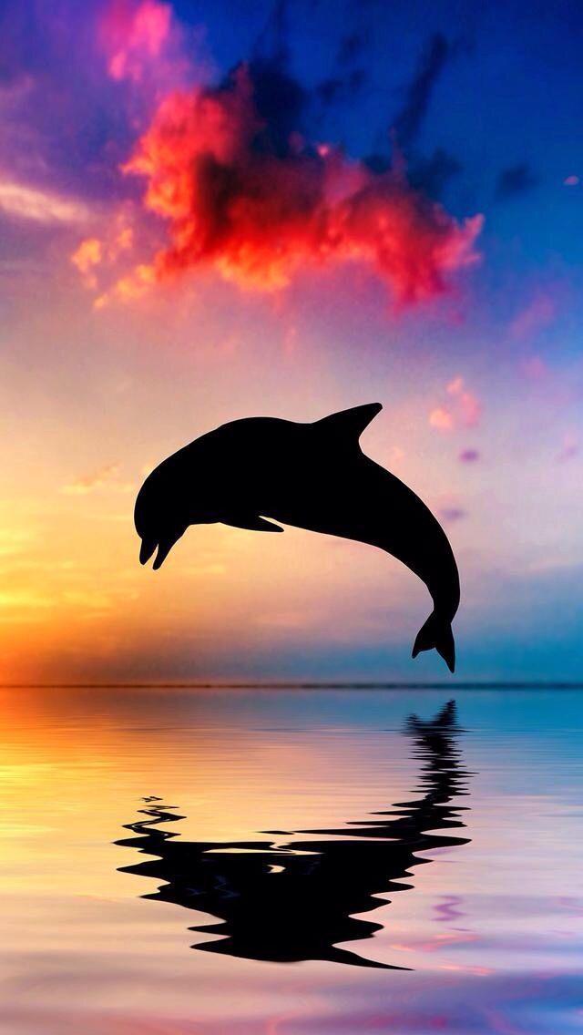 Epingle Par Zehra Sur Les Beau Fond D Ecran Creatures Des Oceans Image De Dauphin Animaux Aquatiques