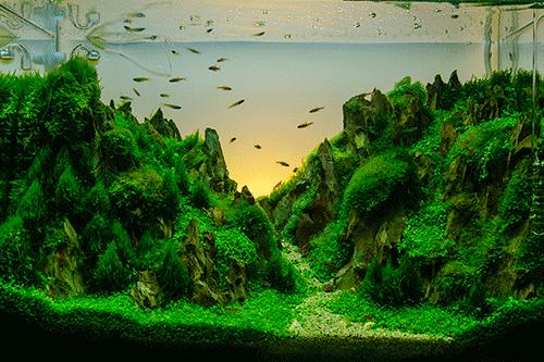 Petbarn Fish Tank Starter Kit