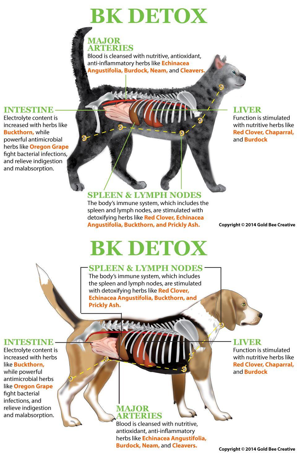 BK Detox for dogs   Diabetic dog, Dogs, Dog cancer