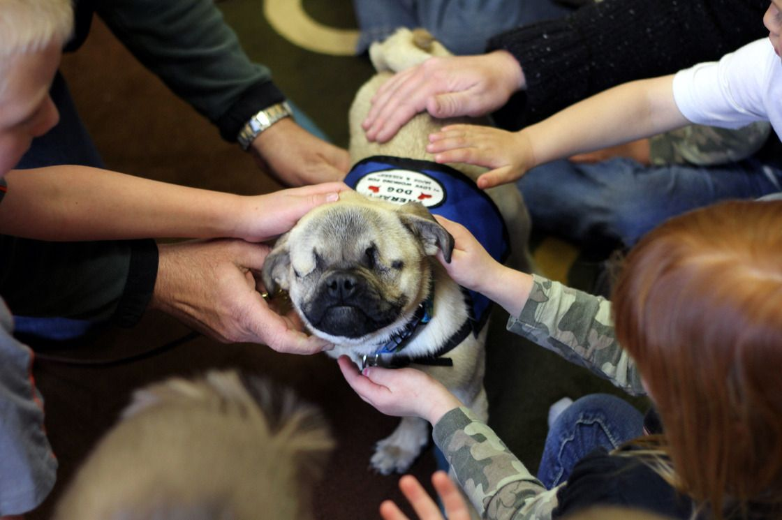 Little Dog Does A Big Job In Oregon Therapy Dogs Pugs Dogs