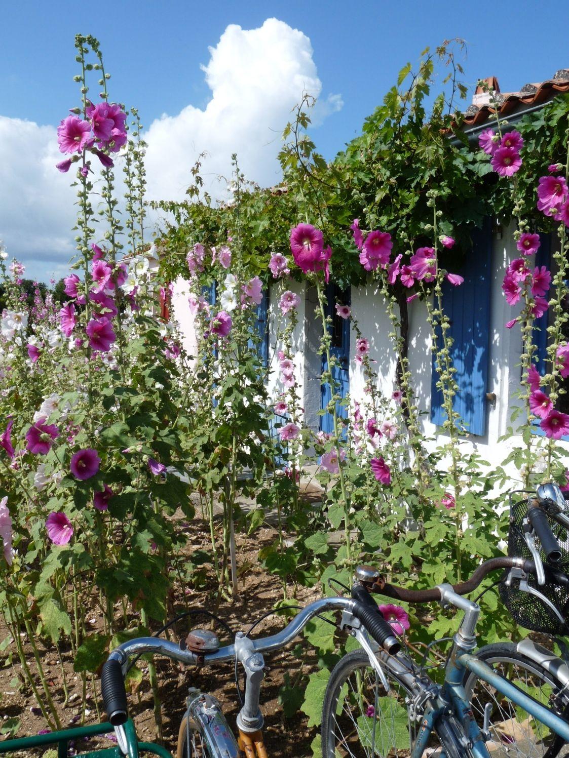 Ile d 39 aix ete fleurs velo ile vacances - Office du tourisme poitou charentes ...