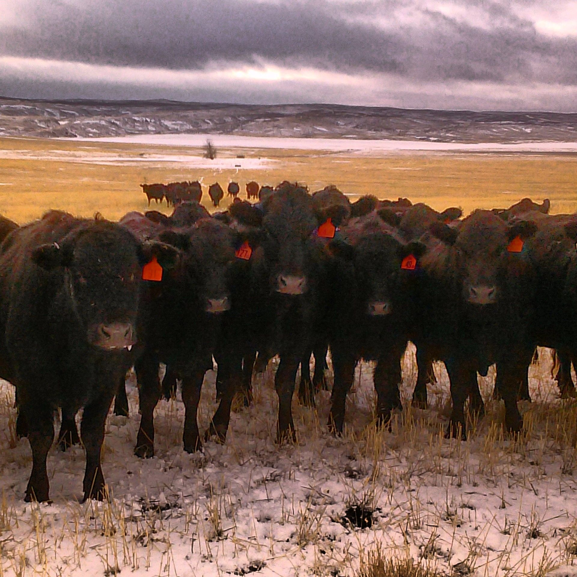 Photo by Colie Moline on the Moline Ranch in Geraldine, MT