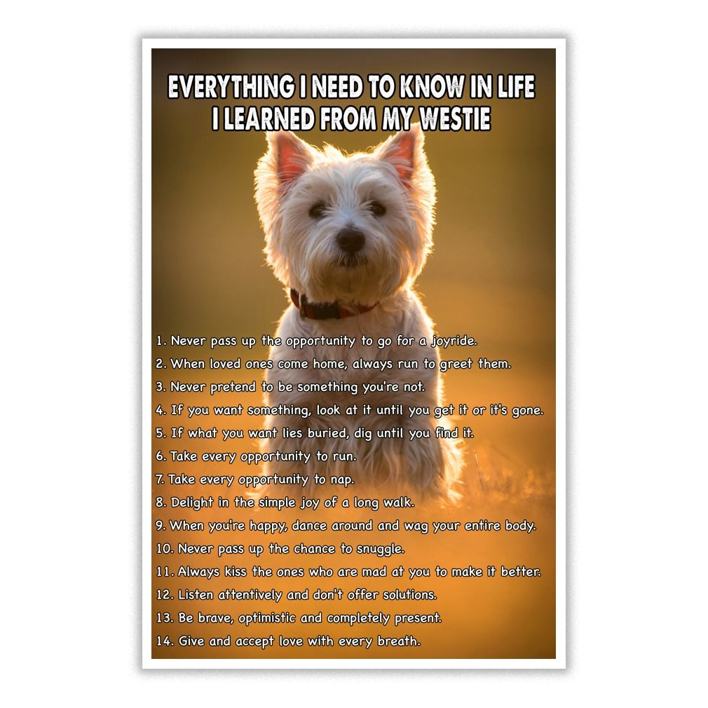 Please Use The Search Bar On The Top Right Corner To Find The Best One Name Age Hobbies Dogs Jobs Pets For You Westies Westie Terrier Pets