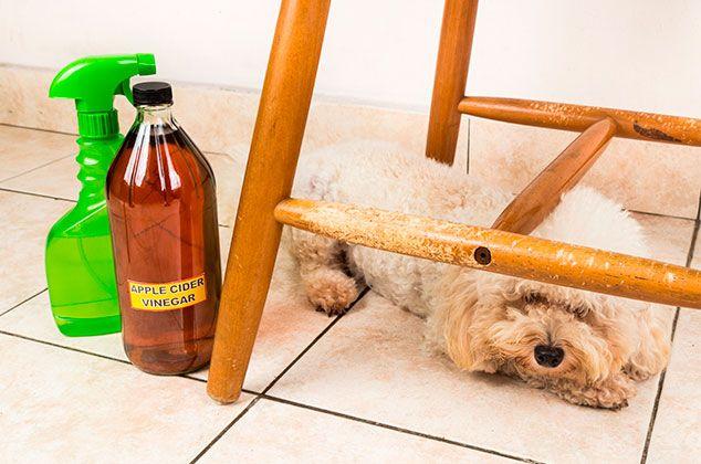6 Repelentes Caseros Para Ahuyentar Y Evitar Que Los Perros Orinen En Casa Orina De Perro Repelente Para Perros Remedios Caseros Para Perros