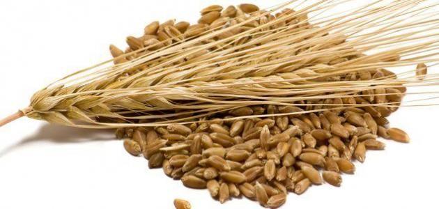 طريقة تحضير شراب الشعير موسوعة موضوع Barley Health Benefits Grain Foods Barley Benefits
