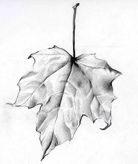 Leaf Drawing 1