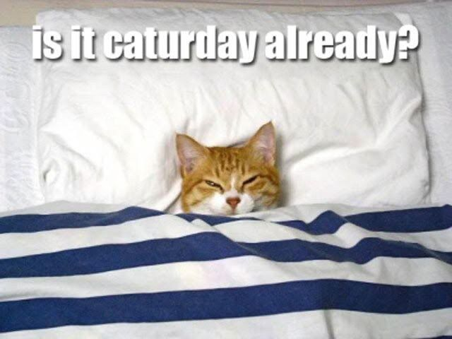 Is it #Caturday already?