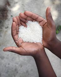 O nosso arroz