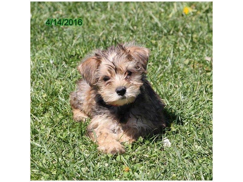Petland Hoffman Estates Il Petland Pets Makes Life Better Pets Cute Animals I Love Dogs