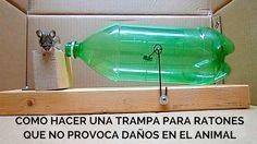 Cómo hacer una trampa para ratones con materiales reciclados que no provoca daños en el animal. #reciclar #reciclaje