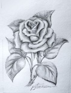 53ab0f5a1 Pencil drawing - the rose … | pencil drawings in 2019 | Pencil ...