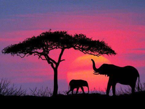 Elephants Paisajes De Africa Paisaje Para Pintar Pinturas En Acuarela Paisajes