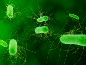 Common E Coli Infection Affecting Humans Enteritis Uti And Kidney Failure Uti Treatment Ecoli Antibiotic