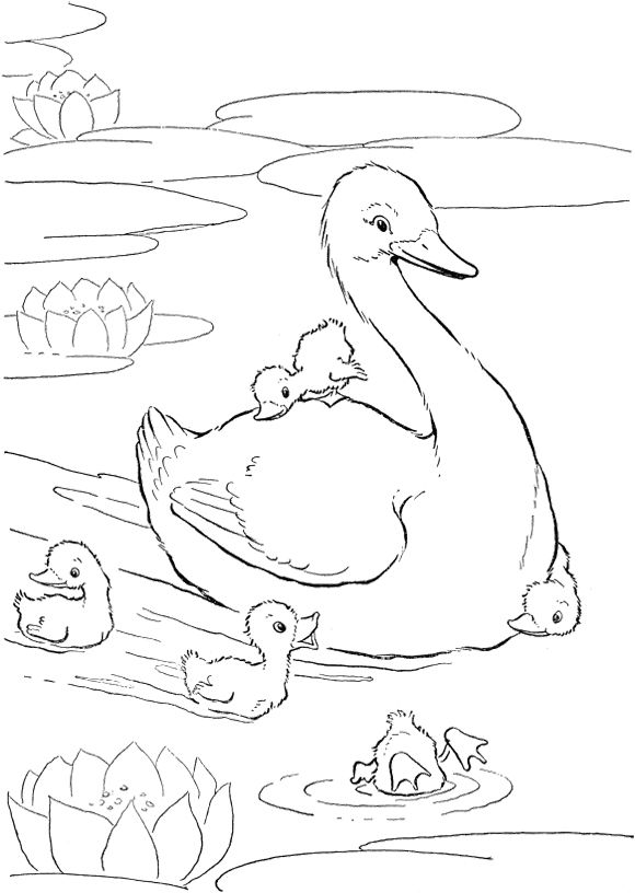 Family Of Ducks Playing In The Lake Coloring Pages Mom Coloring