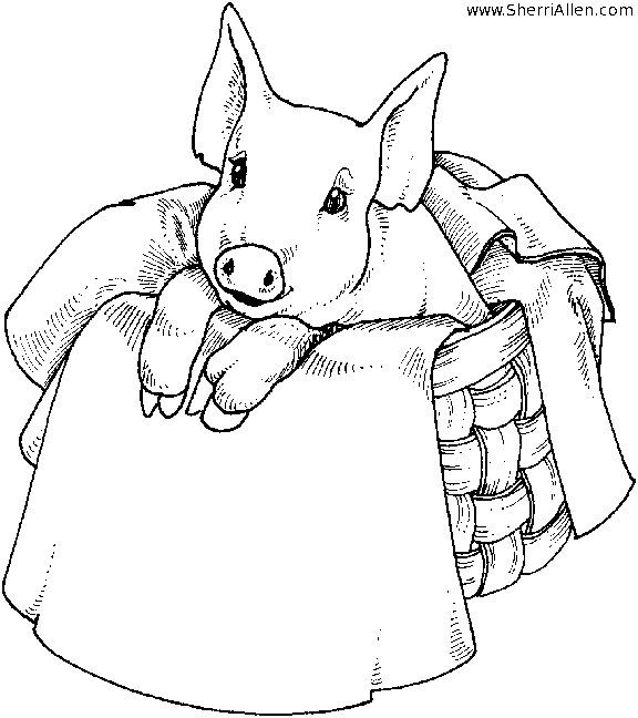 cute pig  animal coloring pages animal coloring books
