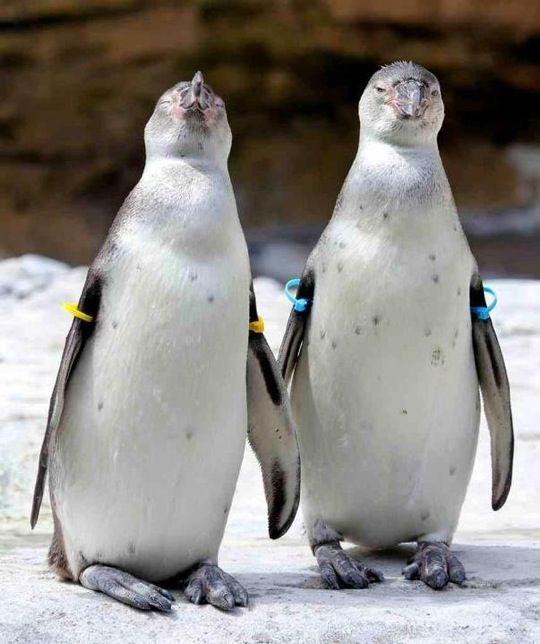 Woodland Park Zoo Woodland Park Zoo Penguins Zoo