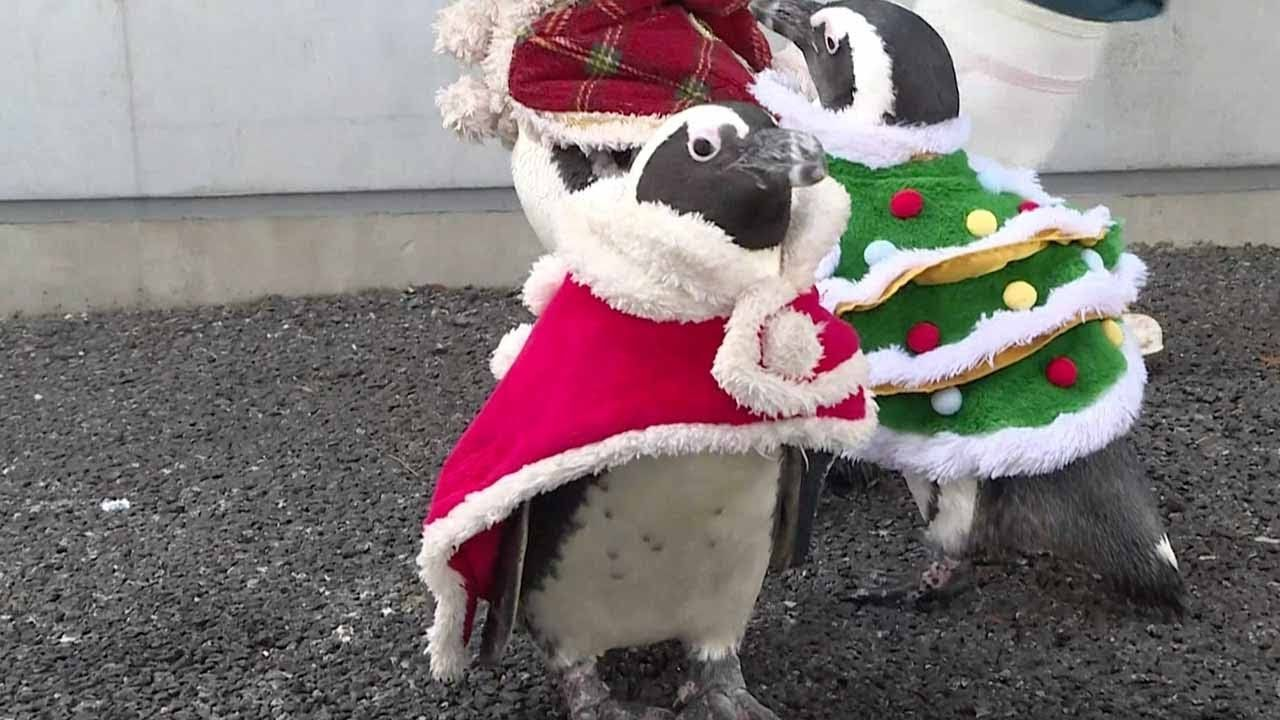 Christmas penguins parade around Japanese amusement park