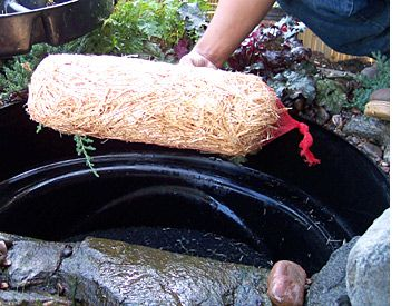 Koi pond care for the colder months gardening stuffs for Koi pond upkeep